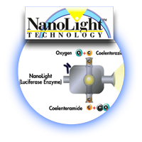 Division---Nanolight-reaction